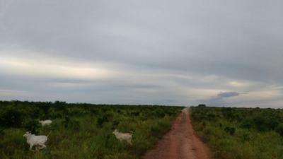 Fazenda Em Rio Sono-to, P/ Agricultura 23 Km De Novo Acordo