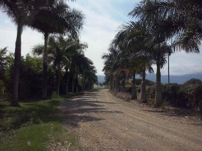 Lote Con Anteproyecto De Bodegas En Rozo Valle