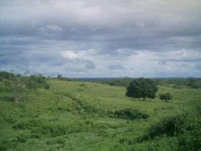 Fazenda Em Arapoema - To, P/ Pecuária - 335