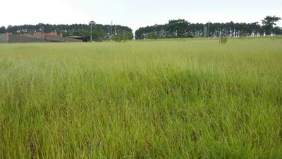 Terreno Em Jardim Dos Pinheiros, Atibaia/sp De 800m² À Venda Por R$ 350.000,00 - Te102960