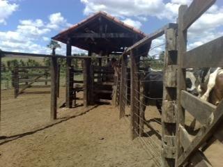 Fazenda A Venda Em Ipameri - 200
