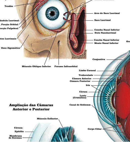 Mapa Anatomia Do Olho 65x100cm Foto Hd Decorar Oftalmologia