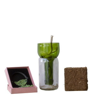 Kit Little Plant 15, Maceta Autorregante