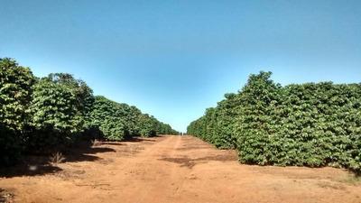 Fazenda Café 204 Hectares Patrocínio (mg) - Cod: Mta1015