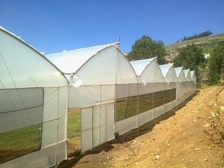 Plástico Agrofilm Para Invernaderos / Calibre 6, 7 Y 8