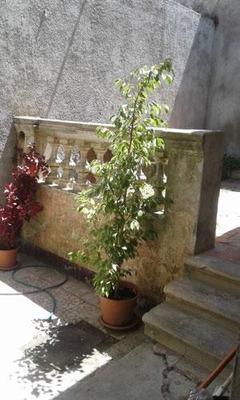Pu, Una Planta, No Gge, Patio Y Gran Bbcc De 40m2