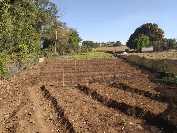 Rural Para Venda, 0 Dormitórios, Fazenda Velha - Artur Nogueira - 574