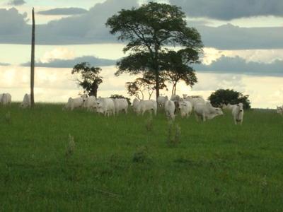 Fazenda Rural À Venda Em Navirai - Ms. - Fa0203