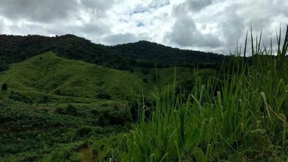 Fazenda A Venda Em Eldorado-sp 480 Hectares - 31617