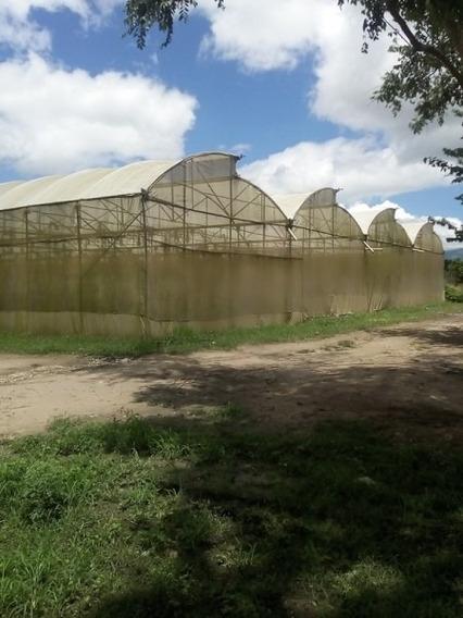 Invernaderos Chivacoa