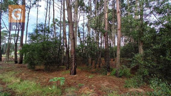 Terreno En Maldonado (parque Burnet)