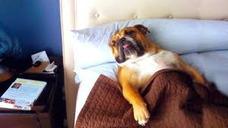 Guarderia Canina Como En Casa