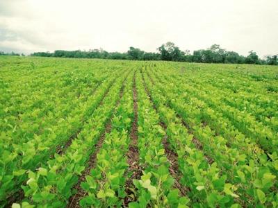 Fazenda Para Venda Em Barra Do Corda, Zona Rural - 1060_2-869956