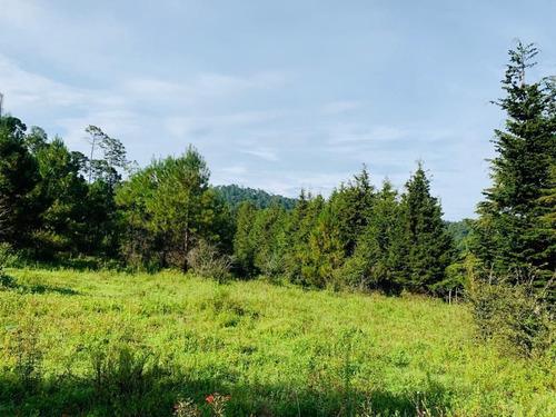 Imagen 1 de 9 de Terreno En Venta.