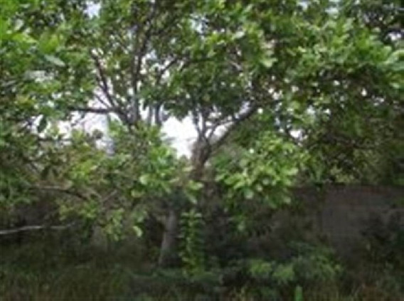 Terreno Em Povoado De Pium, Nísia Floresta/rn De 0m² À Venda Por R$ 60.000,00 - Te618899