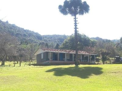 Excelente Fazenda, Próximo A Curitiba