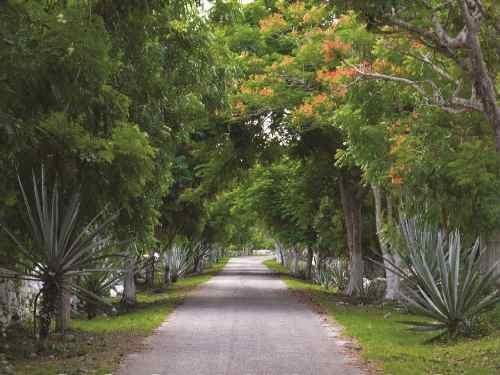 Lotes De Inversión En Venta Con Acceso En Tixkuncheil Yucatán