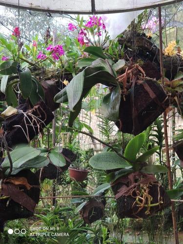Imagem 1 de 1 de Lindas Orquídeas A Sua Disposição