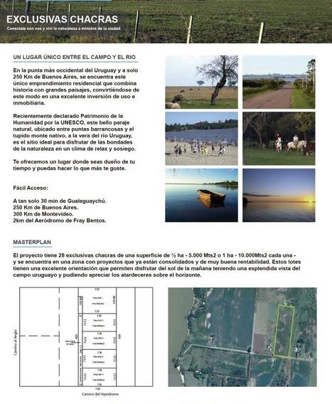 Venta Terrenos Fracciones 20000 M2 Fray Bentos Uruguay