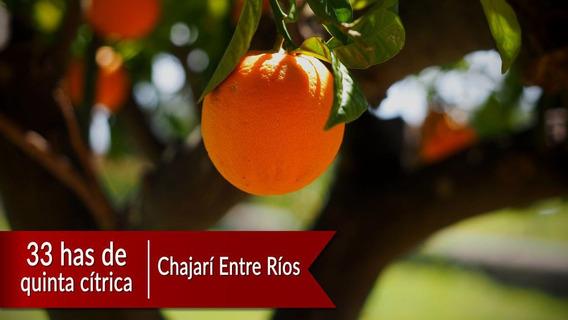 Venta Quinta Citrica Chajarí Entre Ríos