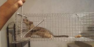 Jaula Trampa Para Ratas Y Ratones, Calidad Y Garantía Total!