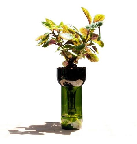 Plantas Interior Dolar Negro Little Plant 24 Sin Soporte