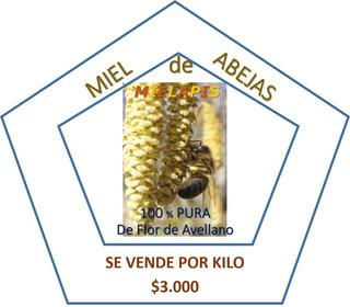 Venta De Miel 100% Pura De Flor De Avellano