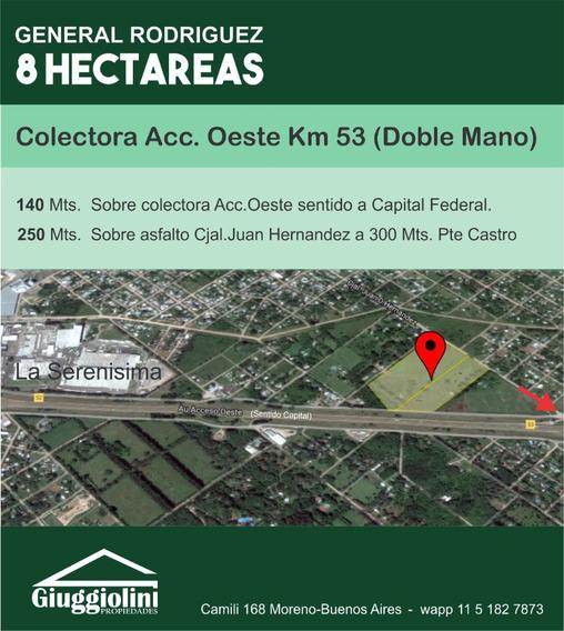 Fraccion S/ Colectora Gaona 8 Ha Gral. Rodriguez