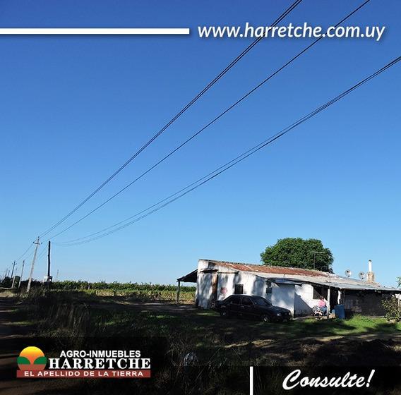 Chacra 4 Has Con Mejoras Montevideo Rural Harretche