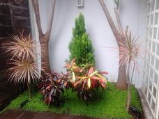 Jardinero Particular En Todo Lima Al 996754755