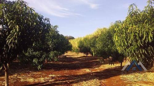 Sítio Com 2 Dormitórios À Venda, 32000 M² Por R$ 460.000,00 - Zona Rural - Jataizinho/pr - Si0010