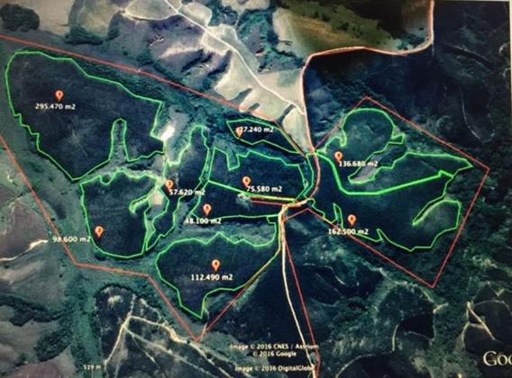 Fazenda Com Eucalipto No Sul De Minas, Tem 167 Há E Fica No Município De Serranos. Com 105 Hectares De Eucalipto. - 307