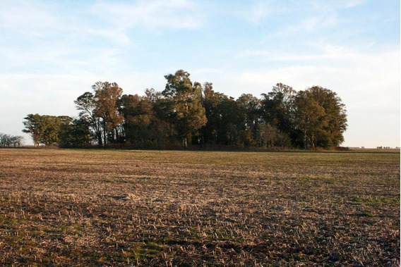 Campo En Venta - 210 Ha En Azul, Provincia De Buenos Aires -campo Agricola Ganadero