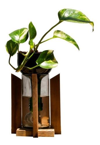 Scindapsus Little Plant 24 Con Soporte, Maceta Autorregante