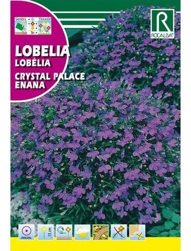 Imagen 1 de 4 de Semillas Lobelia Crystal Palace Enana Flores Floral Jardin