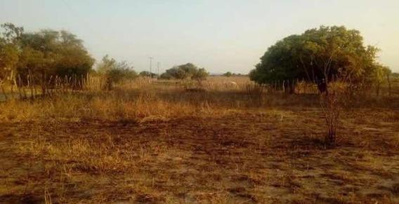 Terreno 50 M2 - Iguatu-ce / Barreiras Dos Pinheiros