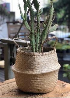 Cesto Canasto Planta Seagrass Natural Vietnam 27x20 Cm