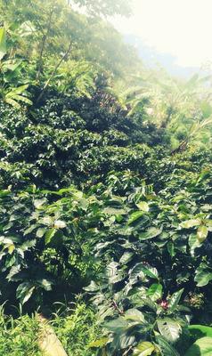 Vendo Chacra De 20hectareas Con Cultivo
