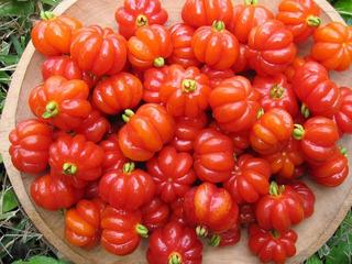 10 Sementes Pitanga Fruta Exótica Para Mudas Promoção