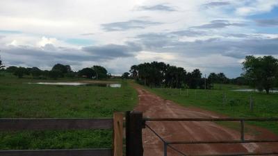 Fazenda Para Venda Em Alvorada - 267