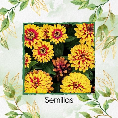 200 Semillas Flor Zinnia Alfombra De Persia + Ob Germinación