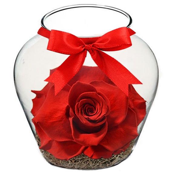 Beleza Da Rosa Encantada Vermelha Giuliana Flores