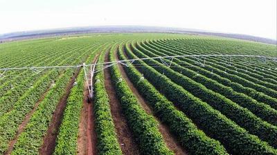 Fazenda De Café Com Aproximadamente 4 Milhões De Pés, 847 Alq, No Serrado Mineiro - Mg E Aceita Parte Em Imóveis - Fa0016