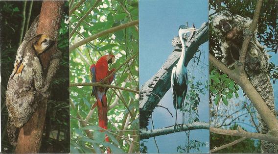 Lote De 10 Figurinhas Surpresa Da Nestle Animais Da Amazônia