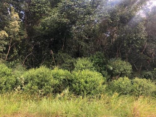 (ref: 5498) Terreno De Chácara - Itanhaém/sp - Indaia