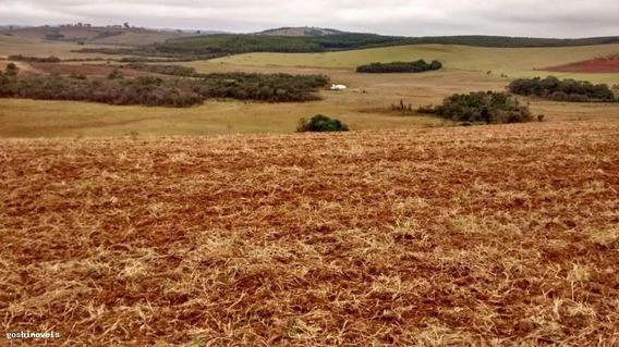Fazenda Para Venda Em Campestre - F36_1-908919