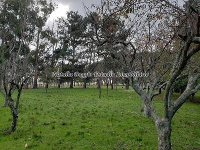 Miramar Santa Irene Campo De 10 Hectareas