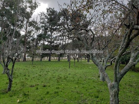 Miramar Santa Irene Campo De 7 Hectareas