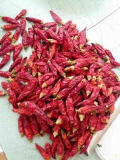 Semillas De Chile Italiano Peperoncini Piccanti