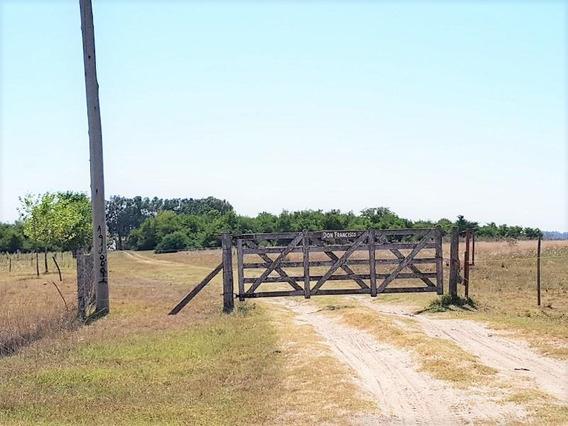 Campo En San Vicente